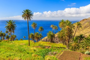 Palm trees in tropical landscape of La Gomera island in Taguluche mountain village, Canary Islands, Spain