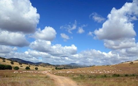 landscape with merino flock and mountains under blue sky with white clouds in southern Spain