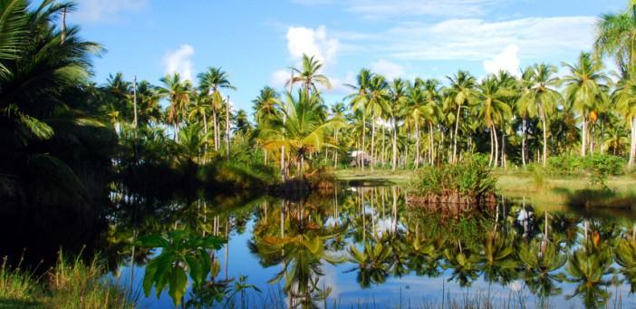 Palmenspiegelung