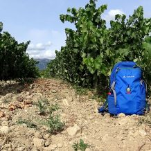 Genusswandern durch Weinfelder_MITourA